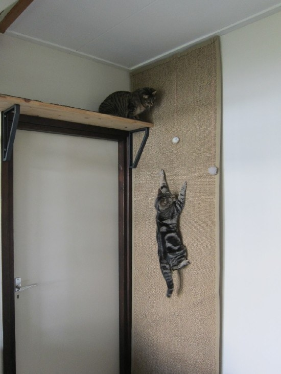 This cat climbing wall for scratching, scaling, and playing.