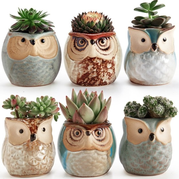 A set of tiny owl planters, the wisest way to house their succulents.