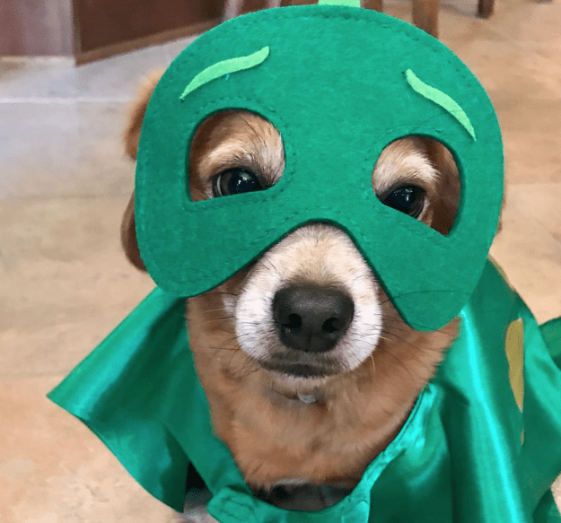 When she dressed her dog up just like you...