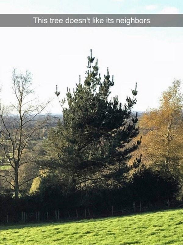 The rudest tree: