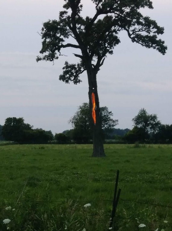 This tree got struck by lightning and starting burning from THE INSIDE OUT: