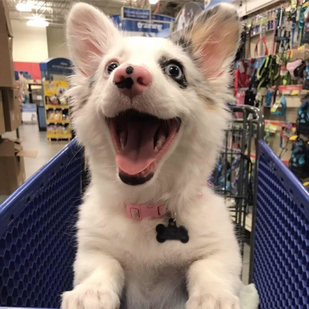 She certainly is one adorable shopping partner!!!