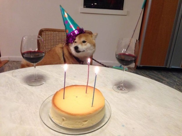 This ~boozy~ birthday shibe!
