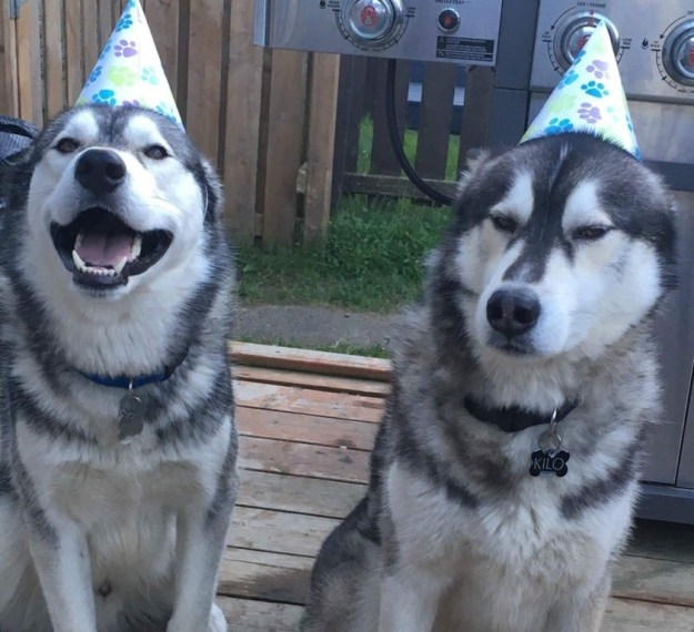 Angory boye did NOT wish happ birth to brother.