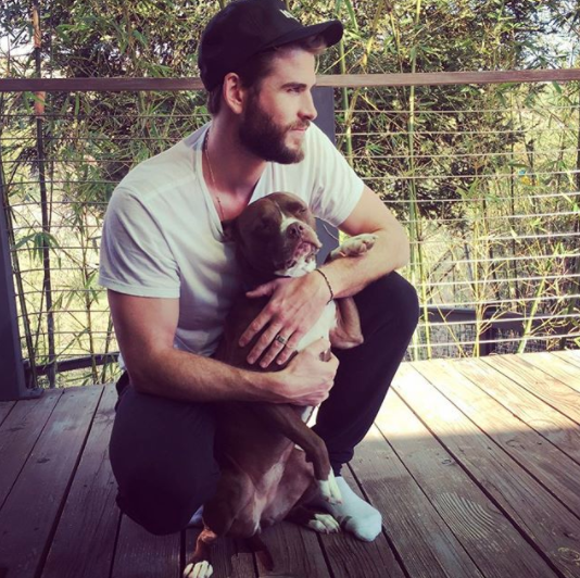 Liam Hemsworth had a pup moment.