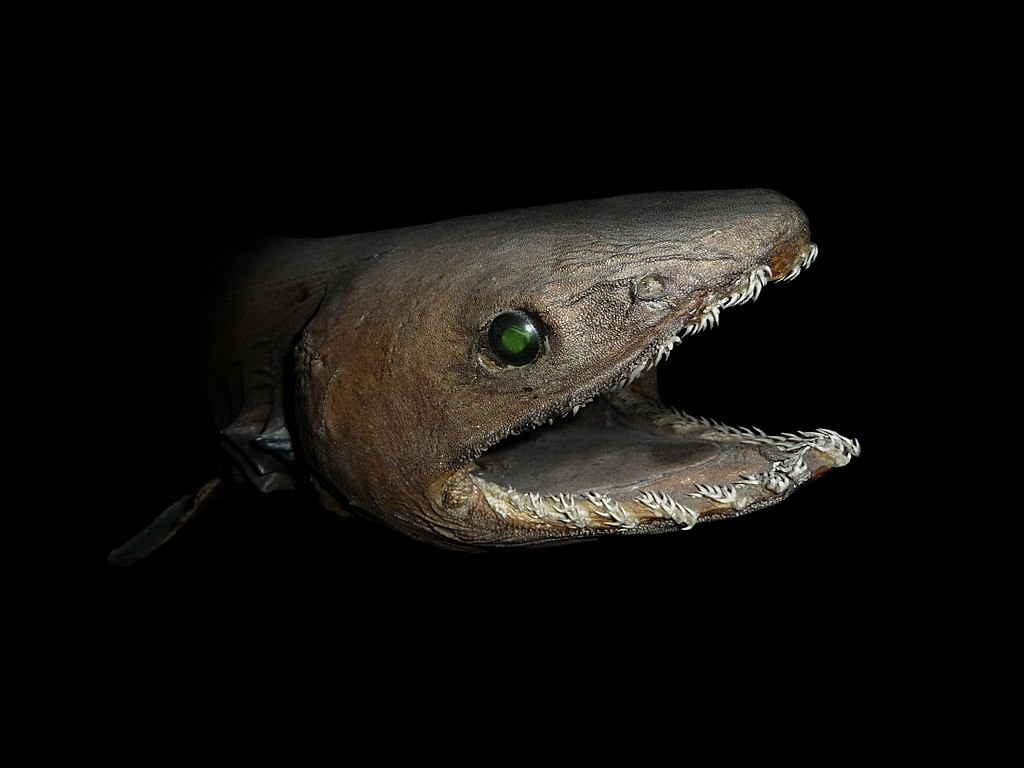 21 Creatures From The Deep Sea That Will Absolutely Give