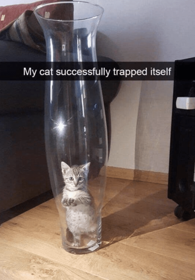 This cat who jumped into some issues: