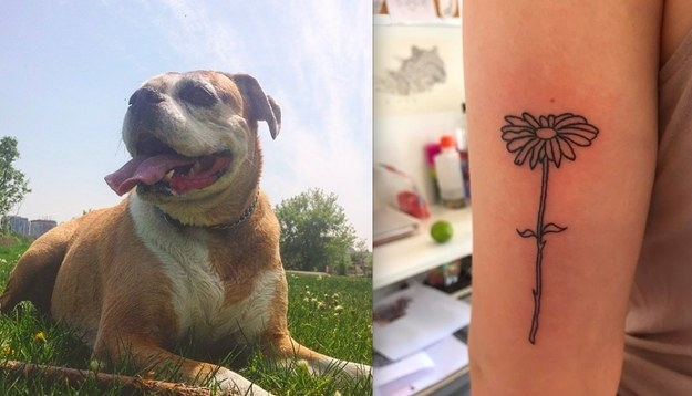 """My dog, Daisy, crossed the rainbow bridge a few months ago and I got a spur-of-the-moment daisy to remember her."" —tegwynh"