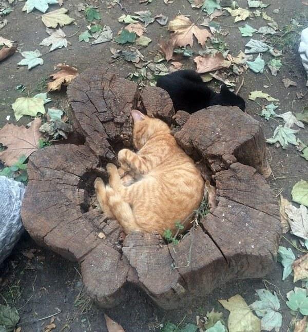 gatos en troncos