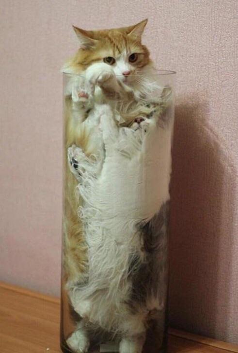 gatos en floreros