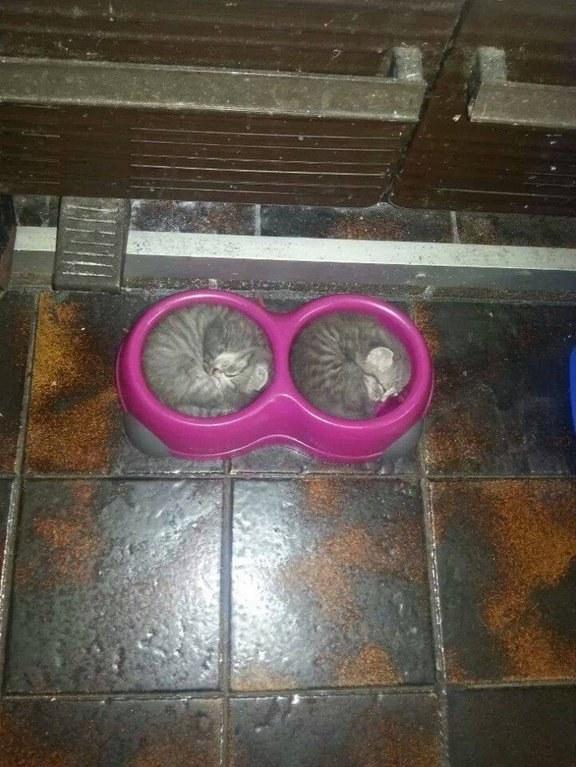 dos gatos