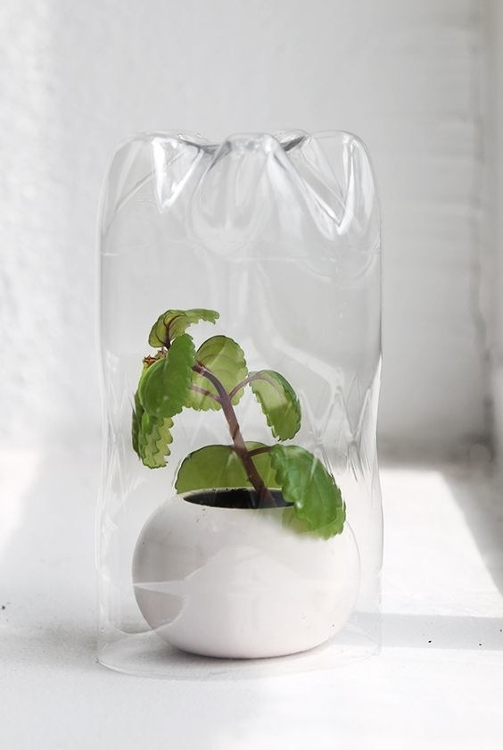 You'll want to make small air holes with a needle.DIY Mini-Greenhouse Instructions