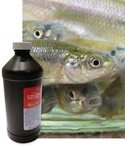 It increases the oxygen in the water and keeps your bait lively.