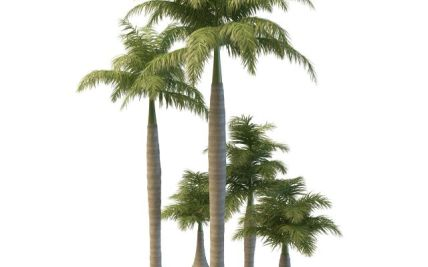 Royal Landscaping with Palm Trees | Gardening: Flower and Vegetables