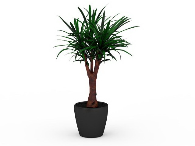 Yucca Gloriosa In Pot 3d Model 3ds Max Files Free Download Modeling 30169 On CadNav