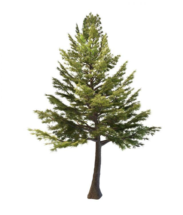 Lebanon Cedar Tree 3d Model 3ds Max Files Free Download