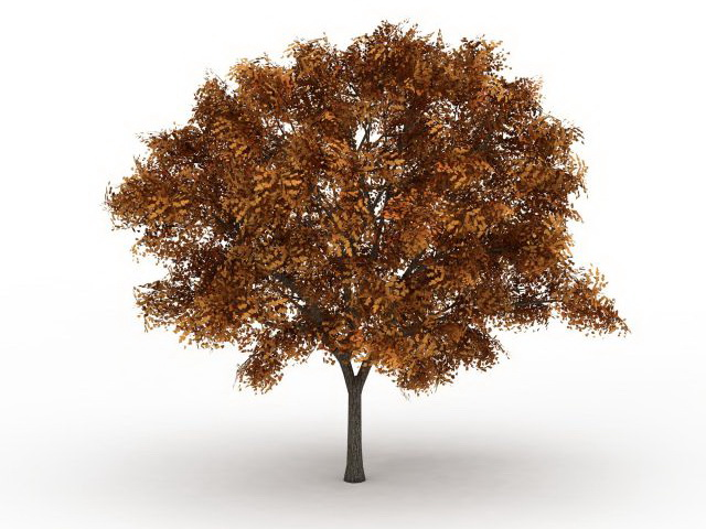 Ash Fraxinus Tree In Fall Color 3d Model 3ds Max Files