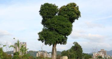 台中景點│超可愛米奇樹就在台中萬坪公園,還有美麗的落羽松步道~