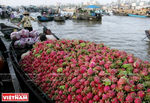 Mekong Delta's tourism sector seeks ways to take off. travel news, Vietnam guide, Vietnam airlines, Vietnam tour, tour Vietnam, Hanoi, ho chi minh city, Saigon, travelling to Vietnam, Vietnam travelling, Vietnam travel, vn news