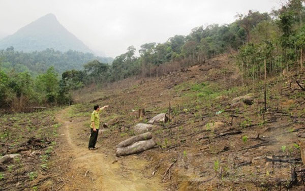 Bac Giang farmers, deplete forest, illegal loggers, Vietnam economy, Vietnamnet bridge, English news about Vietnam, Vietnam news, news about Vietnam, English news, Vietnamnet news, latest news on Vietnam, Vietnam