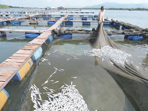 Businesses compensate VND5.5 billion for river fish death, vietnam economy, business news, vn news, vietnamnet bridge, english news, Vietnam news, news Vietnam, vietnamnet news, vn news, Vietnam net news, Vietnam latest news, Vietnam breaking news