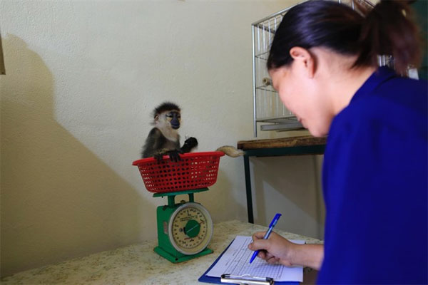 Cuc Phuong National Park, Endangered Primate Rescue Centre, Vietnam economy, Vietnamnet bridge, English news about Vietnam, Vietnam news, news about Vietnam, English news, Vietnamnet news, latest news on Vietnam, Vietnam