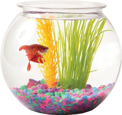 You might be able to have a pet fish in some dorms! Just make sure you ask!