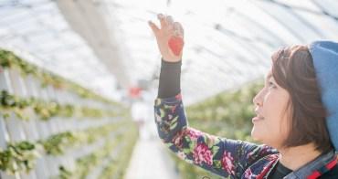 冬天裡的一把火 草莓吃到飽超幸福 Salad Farm 岩手縣草莓園現採現吃最新鮮