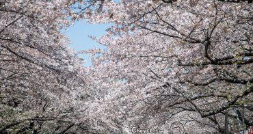 上野公園花見日記 置身櫻吹雪花海隧道裡 日劇女主角換人做做看