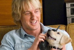 Owen Wilson Is aware of Canines Die A Lot In His Motion pictures