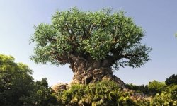 That Time Disney World Visitors Tried To Climb The Tree Of Life