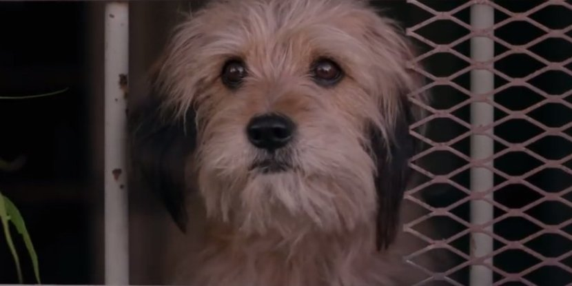 e6673c168a5486c2433527773107d6d8726fe04a - Benji Trailer: The Adorable Dog Is Back For New Netflix Movie