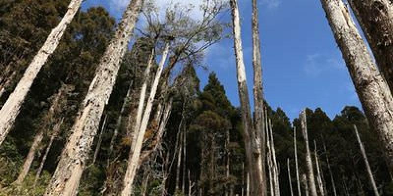 ▌南投景點▌不一樣的夢幻景點♥忘憂森林♥