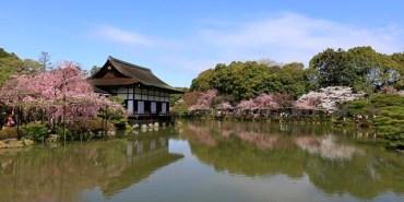 ▌2015京都賞櫻 ▌賞櫻必訪♥平安神宮。神苑♥超級大鳥居,絕美八重枝垂櫻綻放