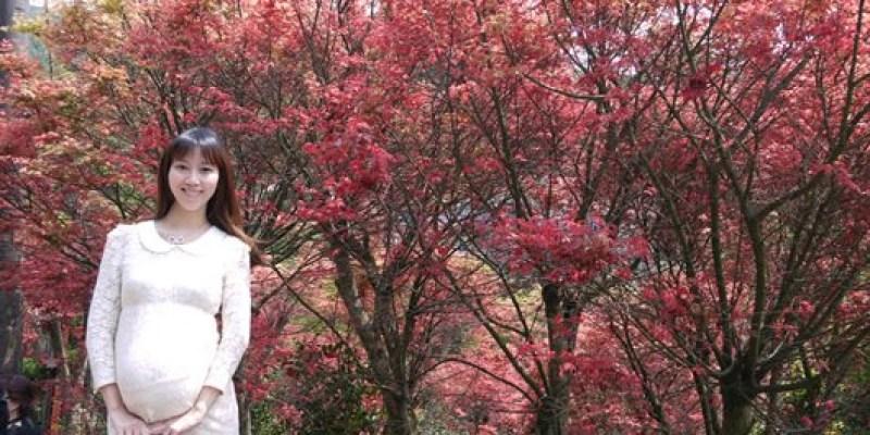 ♥ 迷人的四月楓紅 ♥ 陽明山台北奧萬大