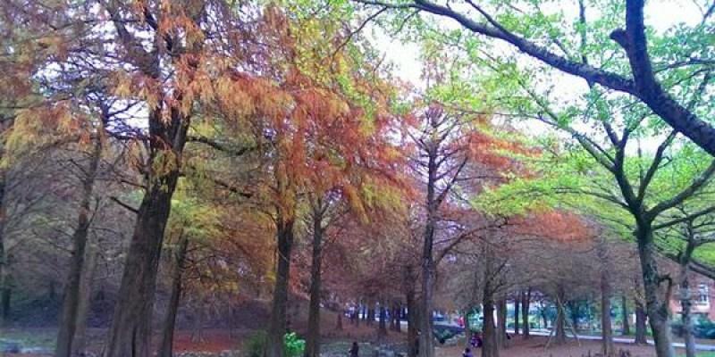 ▌宜蘭景點▌彷彿置身歐洲美景♥宜蘭羅東運動公園♥落羽松正美