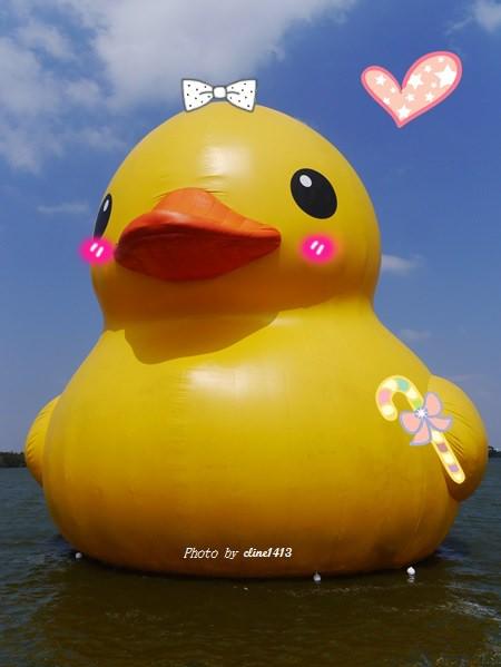 【黃色小鴨】萬人景仰的黃色小鴨來桃園囉♥2013桃園新屋地景廣場藝術節♥