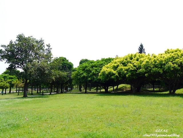 ▌桃園景點▌♥大溪埔頂公園♥適合親子同遊的綠森林!大溪花海,慈湖桃園半日遊