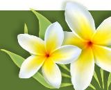 spring_news_flower.jpg