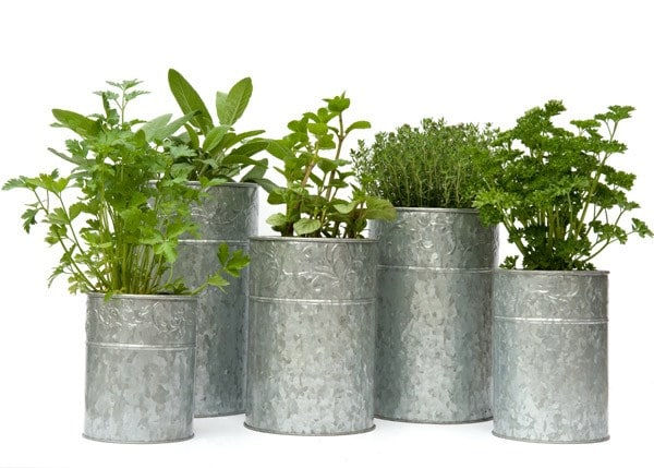 Metal Plant Containers