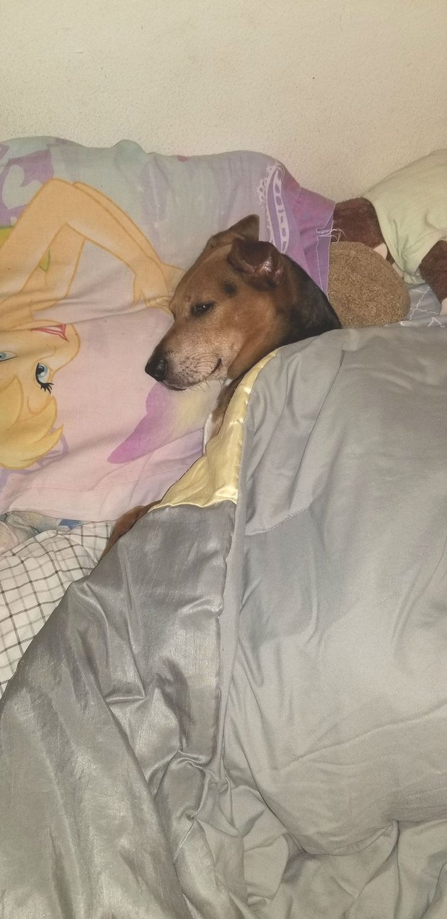 dogs likes to be tucked in at night