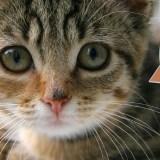 [公告] 出差暫時停更!- 可愛的貓咪