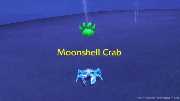 Moonshell Crab