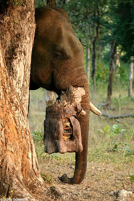 elephant camera trunk