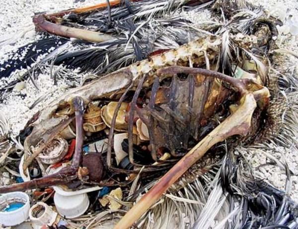 10 невероятно печальных фото мусорного острова в Тихом ...