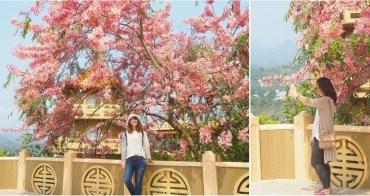 【台南景點】台南也有媲美日本的好風景,艷麗花旗木現正熱映中:寶光聖堂