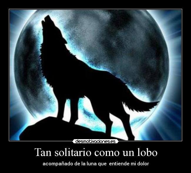Frases De Lobos Solitarios Tristes Www Imagenesmy Com