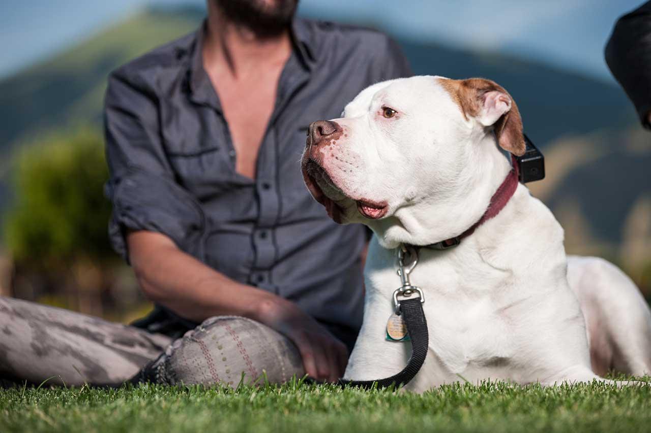 Blue American Bulldog Pitbull Mix