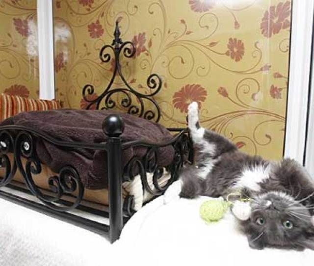 Its A Perfect Life For Singapores Pampered Cats