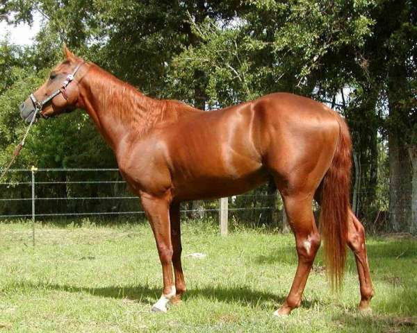 Langs Quarter Horses on EquineNow